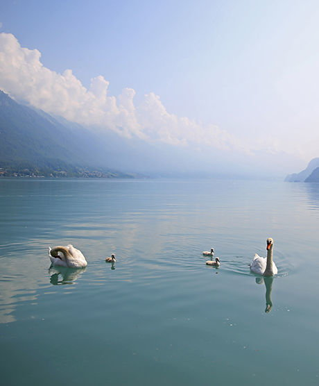 Internal Page: Welcome on the shore of Lake Brienz